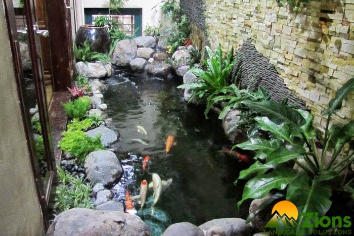 Thiết kế thi công hồ cá Koi đẹp