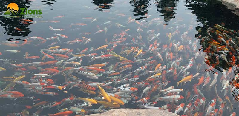 Công nghệ lọc Koi Ecotech áp dụng hồ Koi Hạ Long