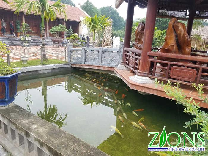 cải tạo hồ cá koi 200m2 tại Thanh Hóa