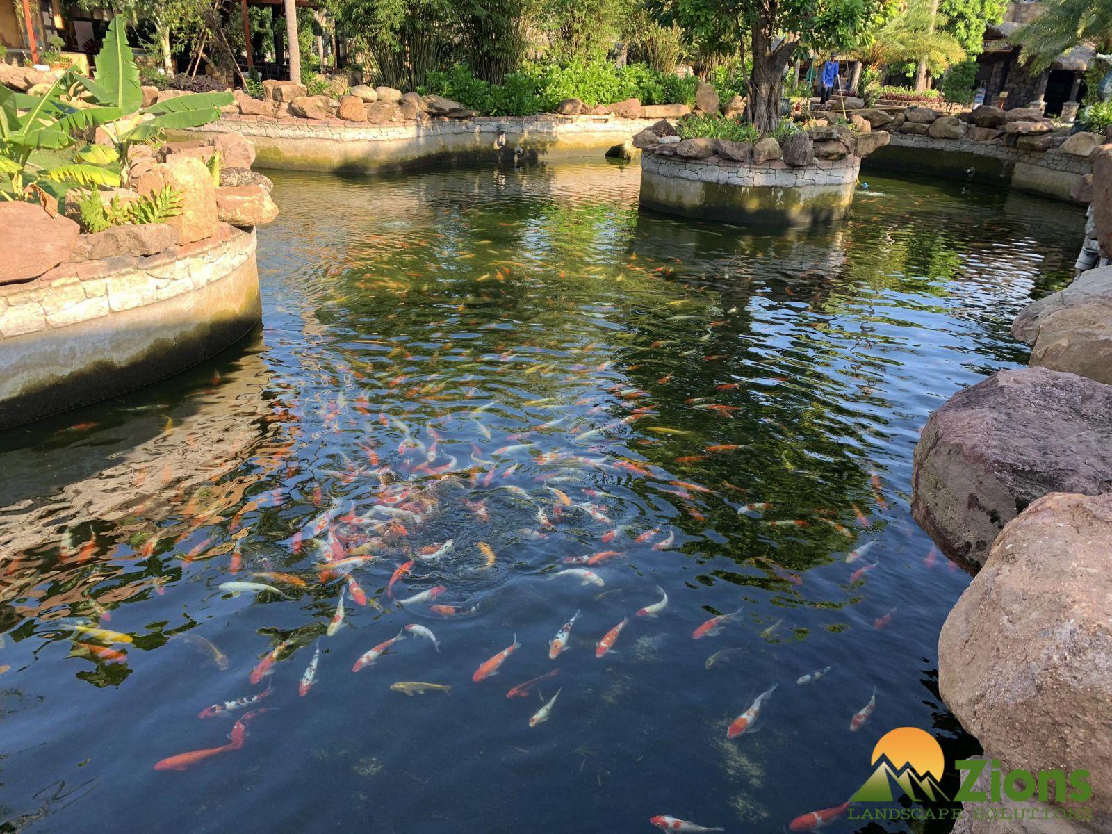 Hồ koi Phú Quốc áp dụng công nghệ lọc Koi ecotech
