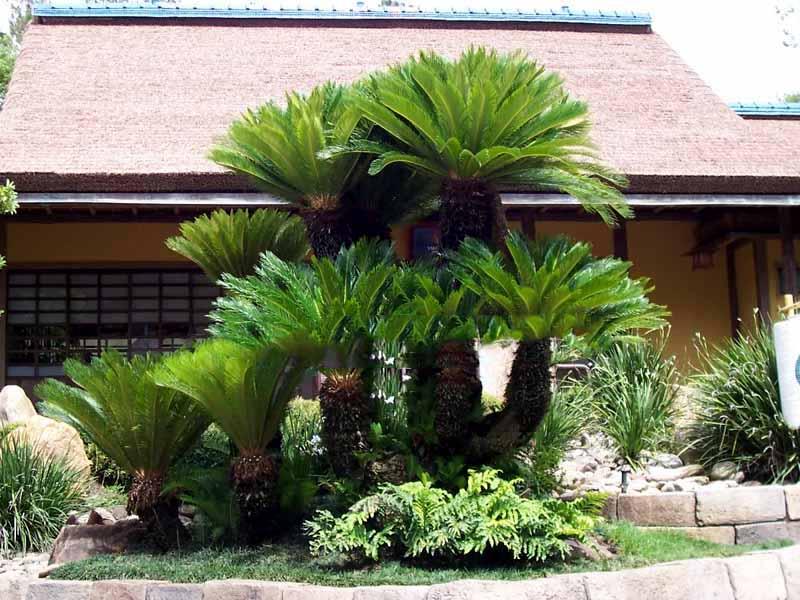 Thiết kế sân vườn tại nhà máy thạch thất